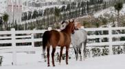 binicilik-pony-003