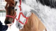binicilik-pony-004