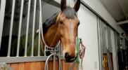 binicilik-pony-005
